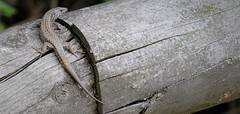 madera vieja 3