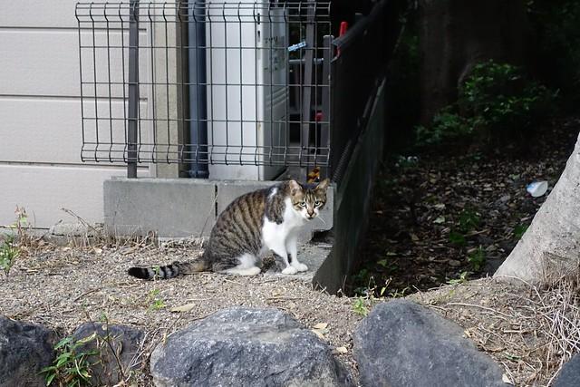 Today's Cat@2019-09-18