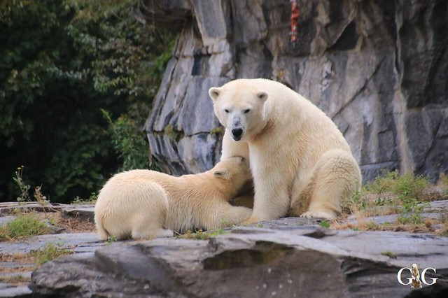 Besuch Tierpark Friedrichsfelde 08.09.201917