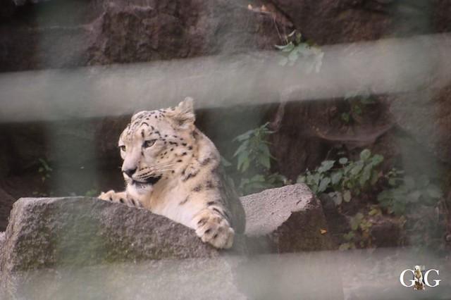 Besuch Tierpark Friedrichsfelde 08.09.201996