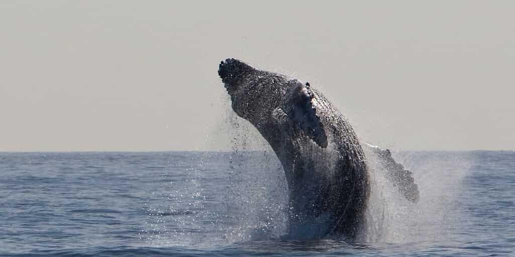 le-cerveau-des-baleines-a-évolué-comme-le-nôtre