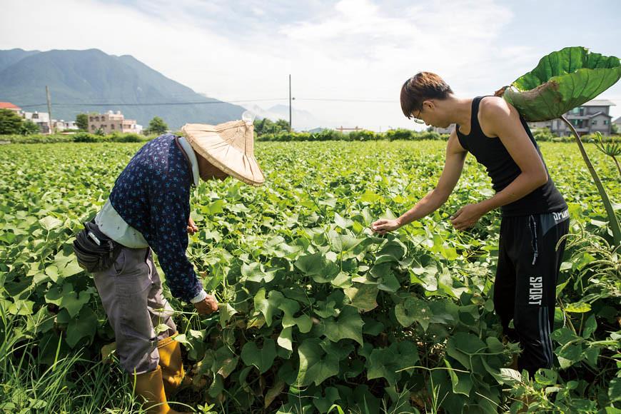 每日清晨6點至上午10 點,父子倆分工採收不同區作物。