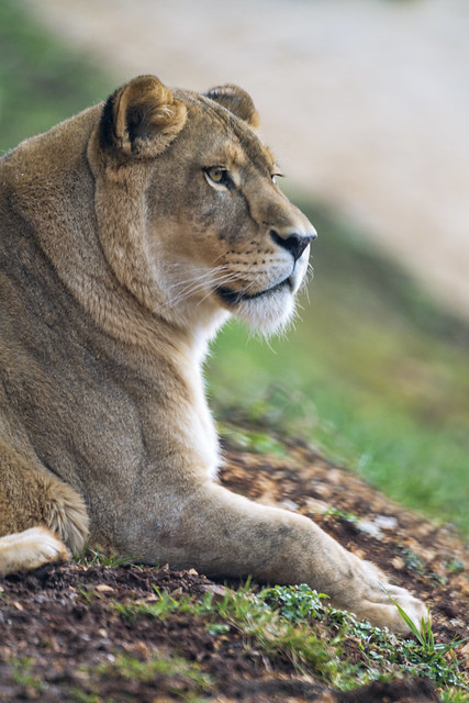 Profile of Timba relaxing