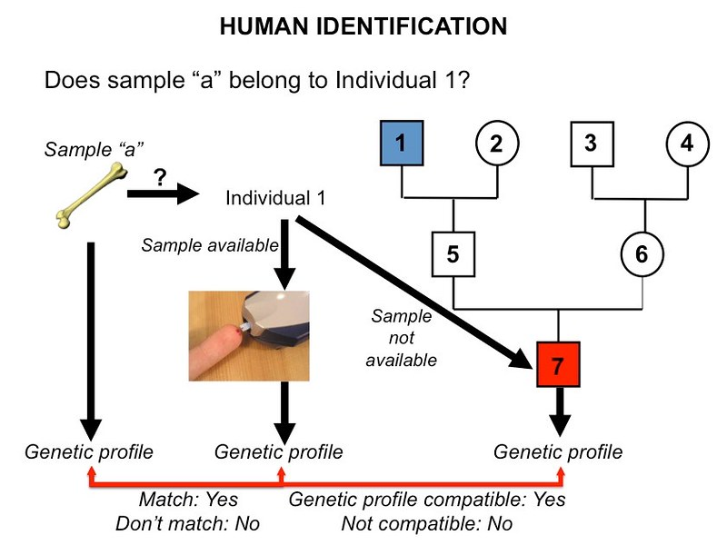Human identification using DNA