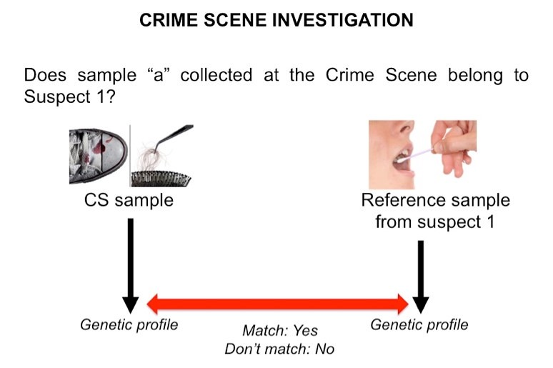 Human identification using DNA in a crime scene investigation