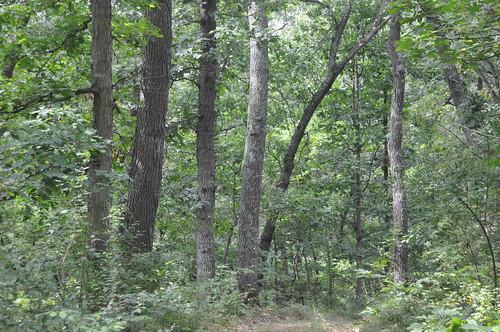 Sun, 08/31/2014 - 15:57 - Michigan Big Woods