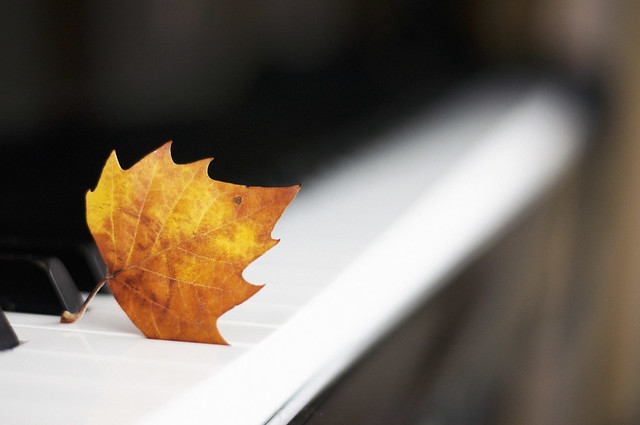 Autumn leaf resting on black and white piano keys