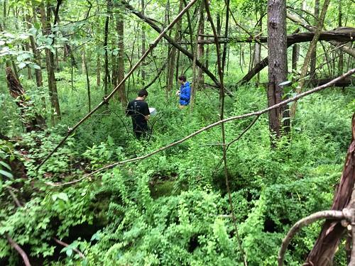Thu, 06/19/2014 - 14:26 - Michigan Big Woods