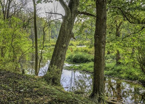 Grim's stream and trees