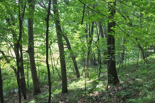 Sun, 08/31/2014 - 16:08 - Michigan Big Woods