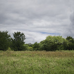 14. Juuli 2019 - 12:02 - Arbor Hills Nature Preserve  The Texas Blackland Prairies are a temperate grassland ecoregion that runs roughly 300 miles (480 km) from the Red River in North Texas to San Antonio in the south. The prairie was named after its rich, dark soil.   Because of the soil and climate, this ecoregion is ideally suited for agriculture, which has led to most of the Blackland Prairie ecosystem being converted to crop production.  Less than one percent of this prairie remains natural, making the tall grass prairies the most-endangered large ecosystem in North America.   The wildflowers and grasses bloom in the spring and early summer before the heat get here.  The trees follow the creeks that run through the area.