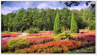 Heidegarten im kalten September 2019