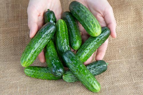 cucumbers-excelsior-1lb