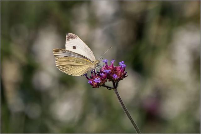 Natur pur / pure nature