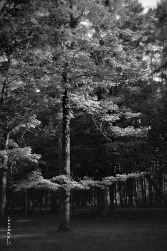 Trees, Autumn, State Park
