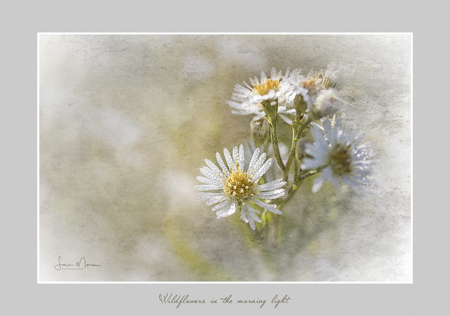 Wildflowers in the morning light