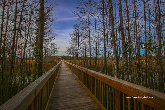 Cypress to Marsh Boardwalk