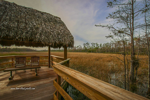 marsh trees cvypress cypresstree grass marshgrass tiki hut tikihut chairs bench rockers rockingchair sky clouds bluesky vcloudy weather landscape outdoors nature mothermnature grassywaters preserve grassywaterspreserve westpalmbeach florida usa