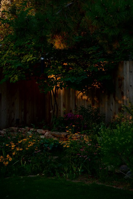Perennial Bed in Early Light