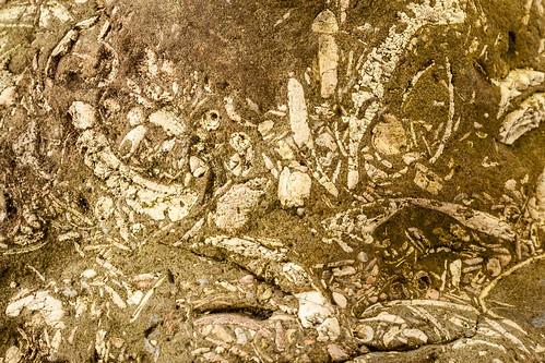 Fossil rock (261/365)