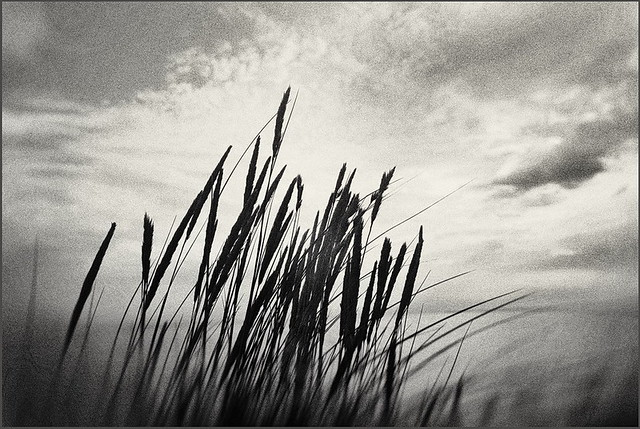 Caressed by the wind