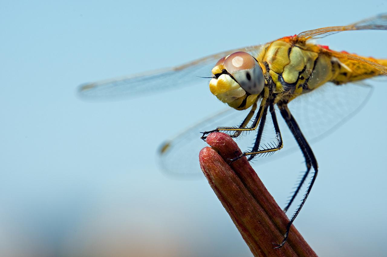 Macros/  proxi/  insectes  - Page 14 48756215007_694c4ac9aa_o