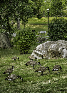 Geese rock and bench
