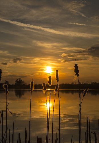 canon6d sunset landscape outdoors nature reeds silhouette outside lake water reflections clouds sky golden uk cambridgeshire
