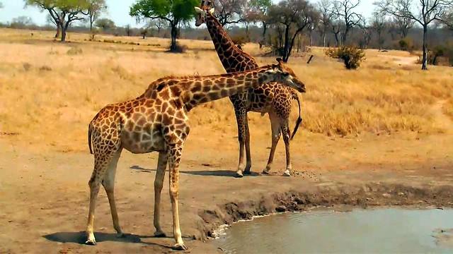 Zuid Afrika 363
