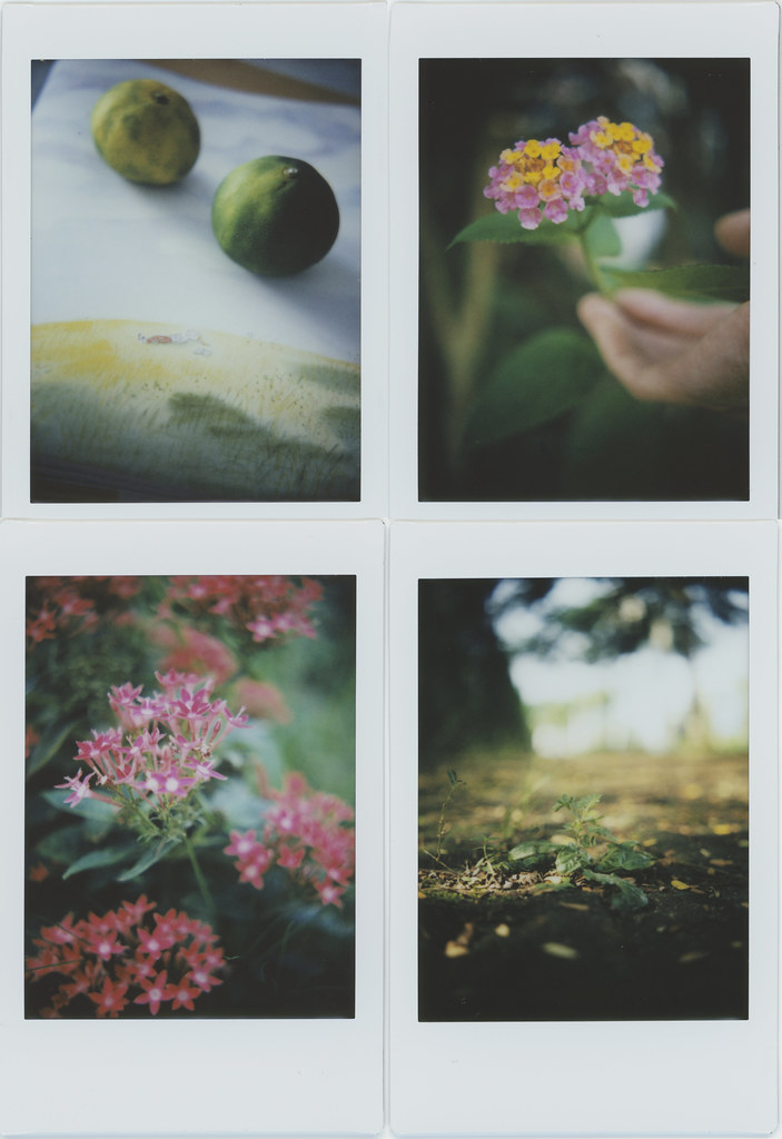 Thurs walk with my instant camera.