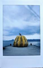 Yayoi Kusama's Yellow Pumpkin by Mary Jane 2040
