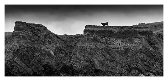 Lonesome Cow-Boy ;-)