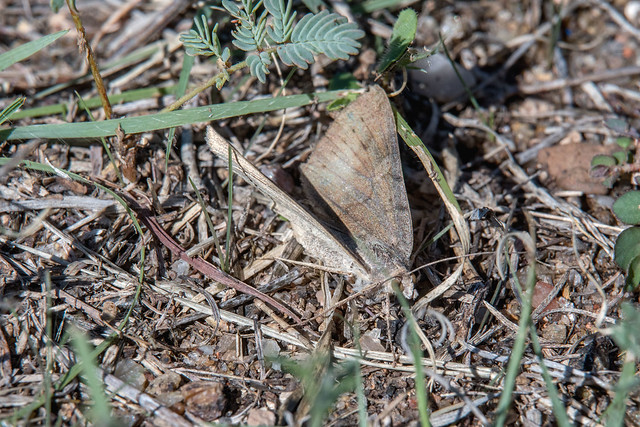 2017 Unidentified Moth 30