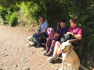 Well behaved dogs who loved having time later for some off lead fun.