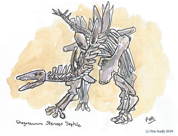 London Stegosaurus sm