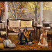 APHRODITE - Heart Homes - Inviting Fall Set