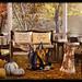 APHRODITE - Heart Homes - Inviting Fall Set