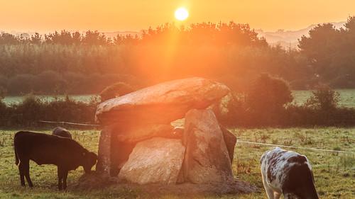 2019 4000bc ballynageeragh cows dunhill eef earlyeuropeanfarmers flowersplants landscape neolithic outdoor sun sunrise whg westernhuntergatherers dolmen ireland munster portaltomb sky waterford