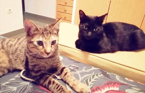 Donatella, gatita parda dulce y guapetona nacida en Abril´19, en adopción. Valencia. ADOPTADA. 48758260023_48244638cc