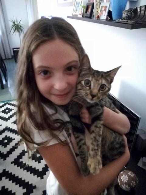 Donatella, gatita parda dulce y guapetona nacida en Abril´19, en adopción. Valencia. ADOPTADA. 48758584711_49336b4ab8_z