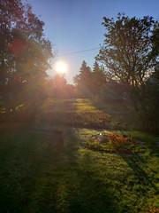 good morning autumn sun 4