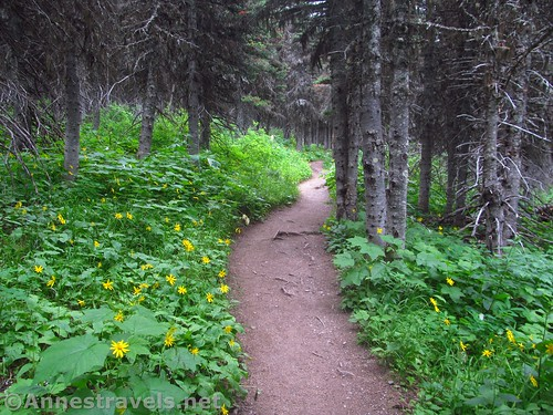 The Cracker Lake Trail through the forest after the bridge, Glacier National Park, Montana