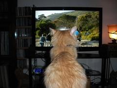 More late night TV watching...