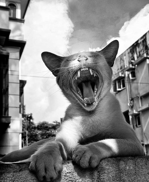 Just Yawn