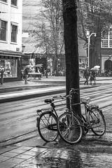 Cycles in Rain