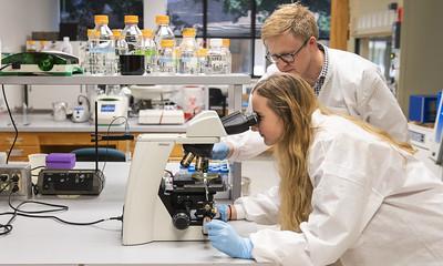 UIS Feature: Undergraduate Research