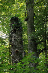 In Wald (02)