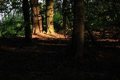 Im Wald (05)