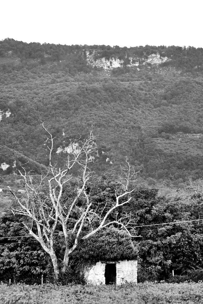 A witch house, near the Sabbath tree?