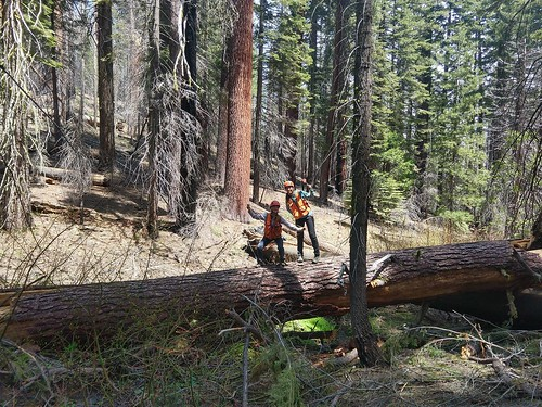 Thu, 09/19/2019 - 15:47 - Photo credit: Yosemite Forest Dynamics Plot Facebook page